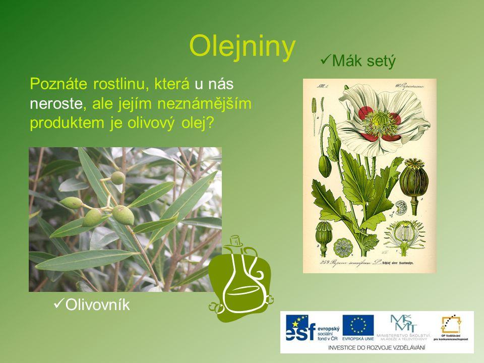 Olejniny Mák setý. Poznáte rostlinu, která u nás neroste, ale jejím neznámějším produktem je olivový olej