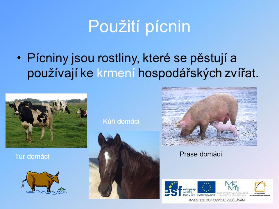Použití pícnin Pícniny jsou rostliny, které se pěstují a používají ke krmení hospodářských zvířat. Kůň domácí.