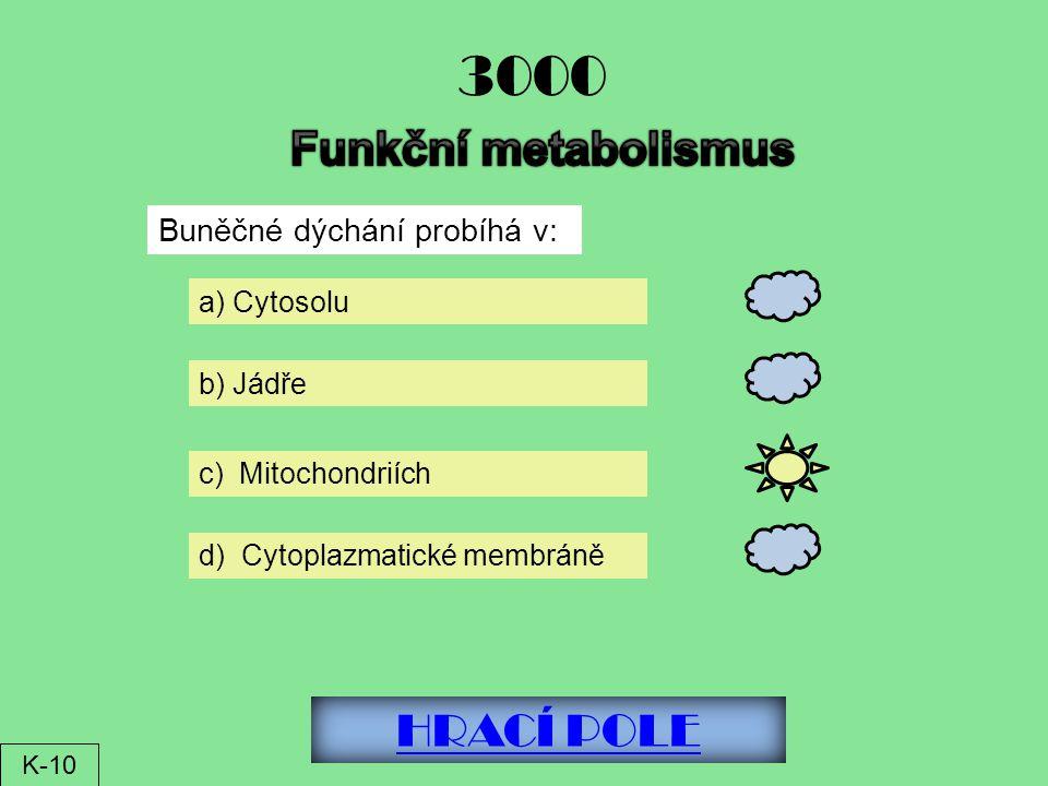3000 Funkční metabolismus HRACÍ POLE Buněčné dýchání probíhá v:
