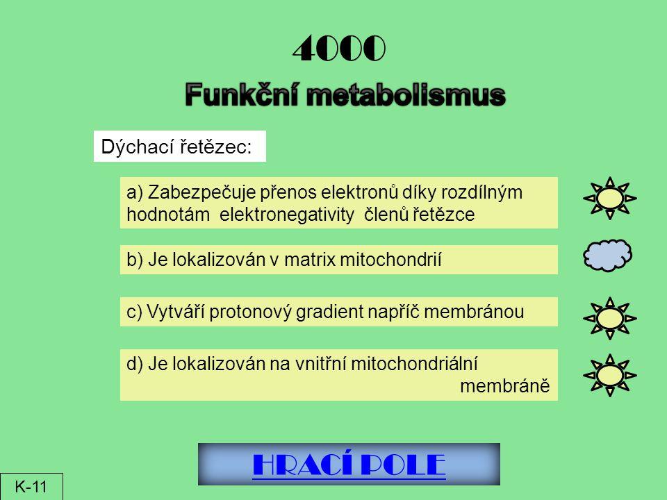 4000 Funkční metabolismus HRACÍ POLE Dýchací řetězec: