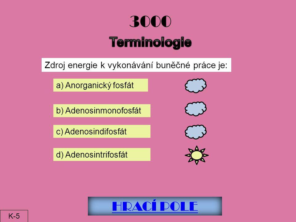 3000 Terminologie HRACÍ POLE