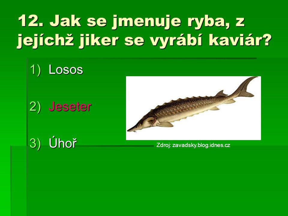 12. Jak se jmenuje ryba, z jejíchž jiker se vyrábí kaviár