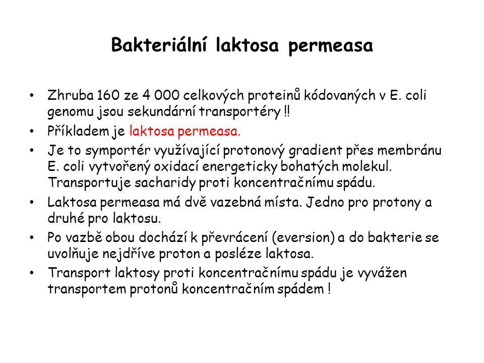Bakteriální laktosa permeasa