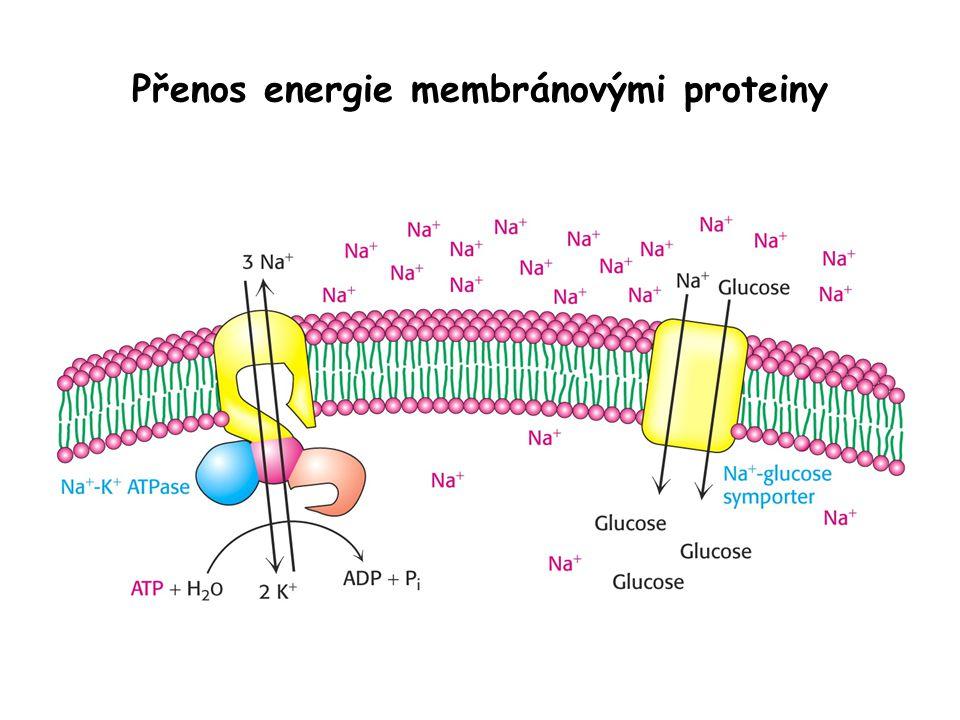 Přenos energie membránovými proteiny