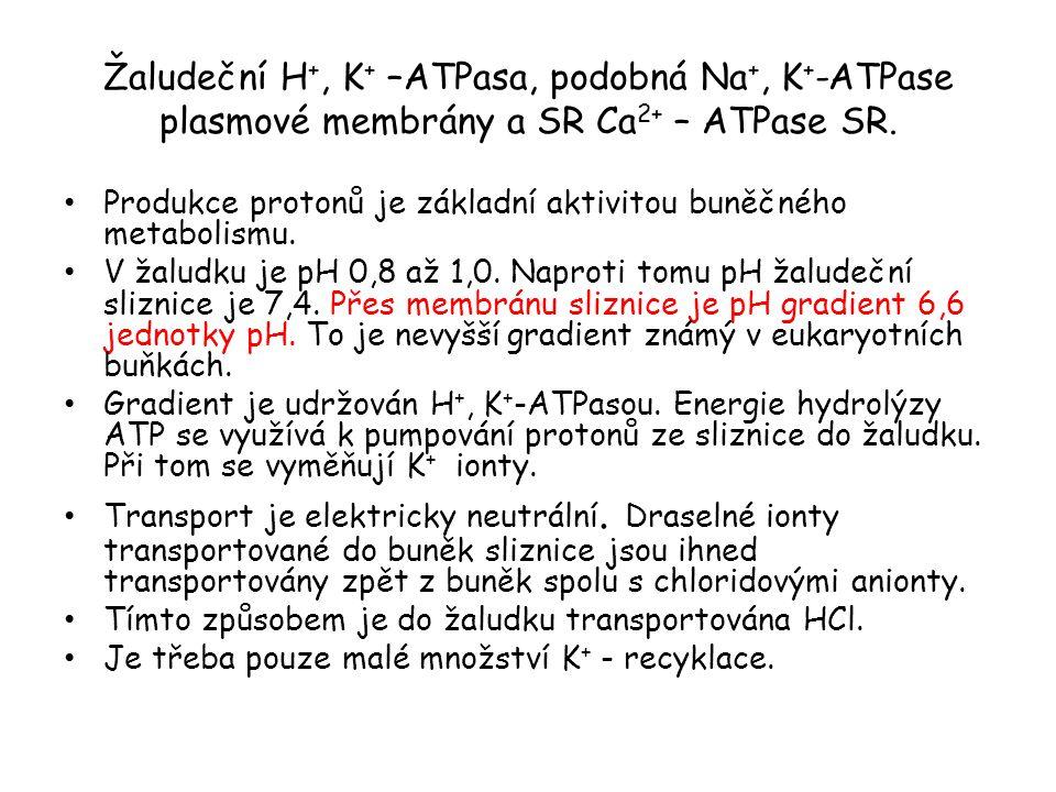 Žaludeční H+, K+ –ATPasa, podobná Na+, K+-ATPase plasmové membrány a SR Ca2+ – ATPase SR.