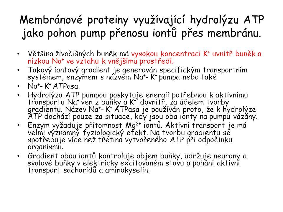 Membránové proteiny využívající hydrolýzu ATP jako pohon pump přenosu iontů přes membránu.