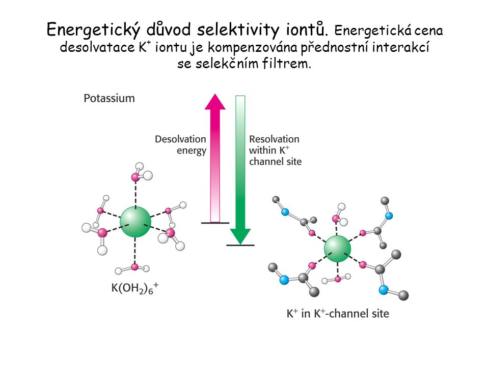 Energetický důvod selektivity iontů