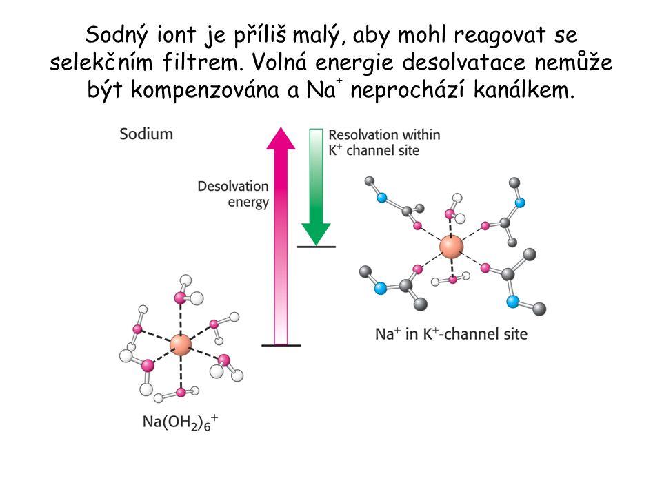 Sodný iont je příliš malý, aby mohl reagovat se selekčním filtrem