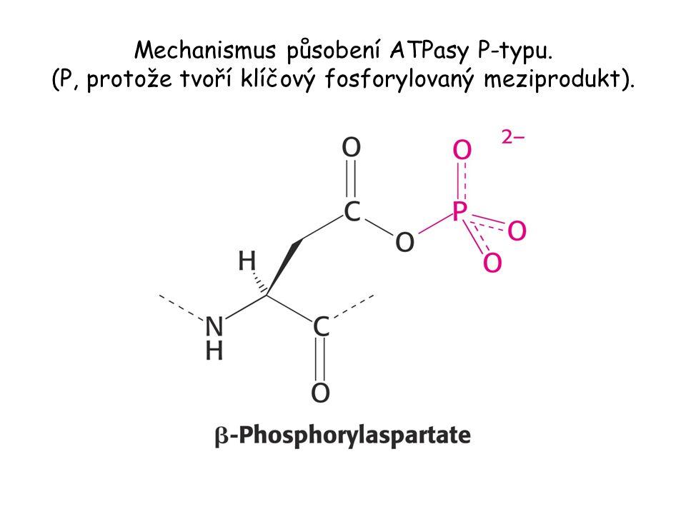 Mechanismus působení ATPasy P-typu