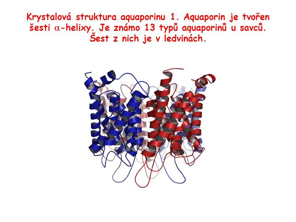 Krystalová struktura aquaporinu 1. Aquaporin je tvořen šesti a-helixy