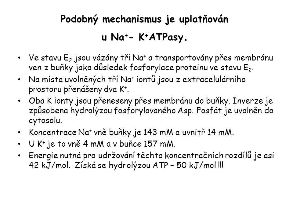 Podobný mechanismus je uplatňován u Na+- K+ATPasy.