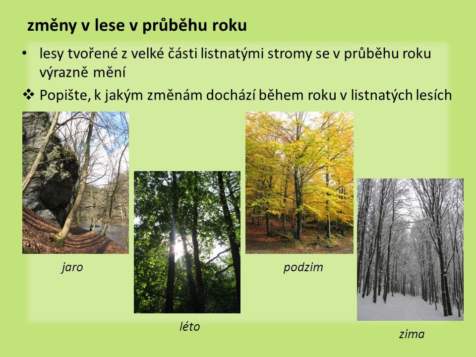 změny v lese v průběhu roku