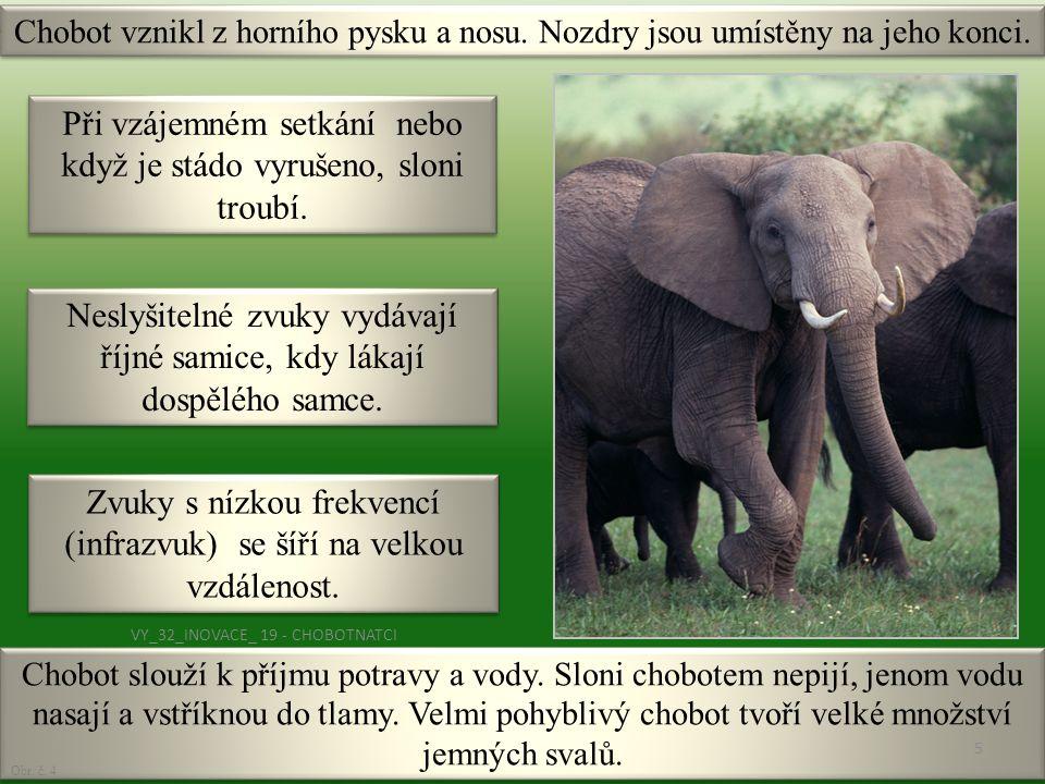 Při vzájemném setkání nebo když je stádo vyrušeno, sloni troubí.