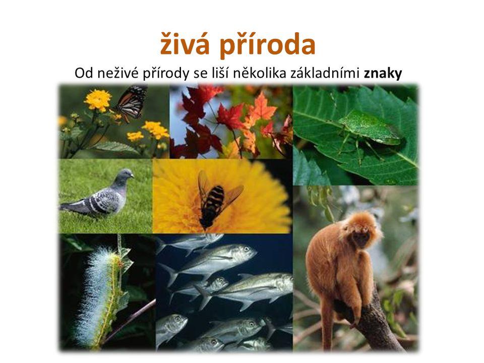 Od neživé přírody se liší několika základními znaky
