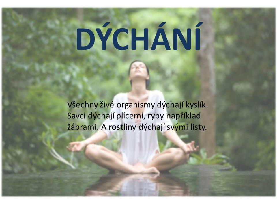 DÝCHÁNÍ Všechny živé organismy dýchají kyslík.