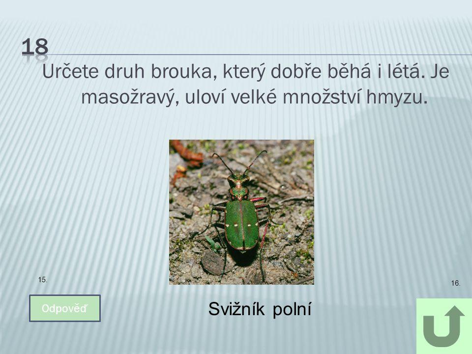 18 Určete druh brouka, který dobře běhá i létá. Je masožravý, uloví velké množství hmyzu. 15. 16.