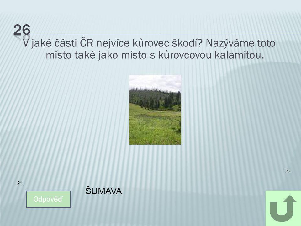 26 V jaké části ČR nejvíce kůrovec škodí Nazýváme toto místo také jako místo s kůrovcovou kalamitou.
