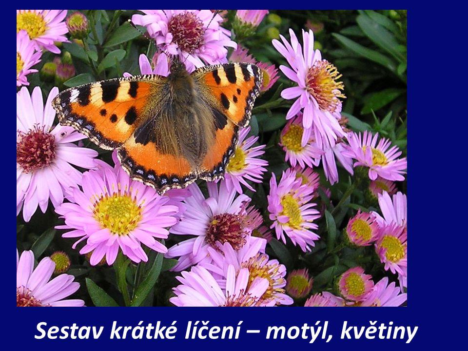 Sestav krátké líčení – motýl, květiny