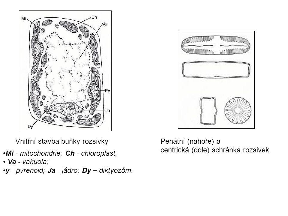 Vnitřní stavba buňky rozsivky