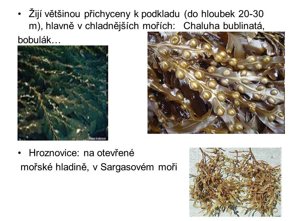 Žijí většinou přichyceny k podkladu (do hloubek 20-30 m), hlavně v chladnějších mořích: Chaluha bublinatá,