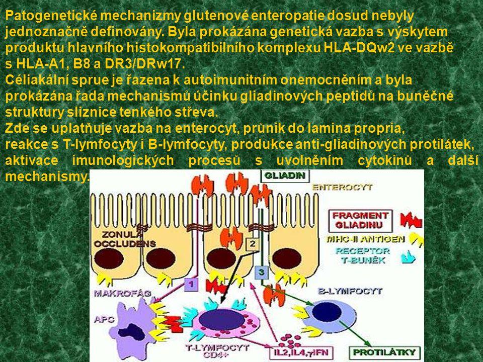Patogenetické mechanizmy glutenové enteropatie dosud nebyly