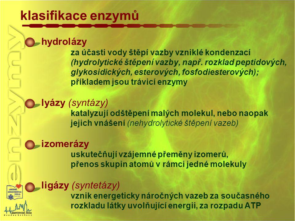 klasifikace enzymů hydrolázy lyázy (syntázy) izomerázy