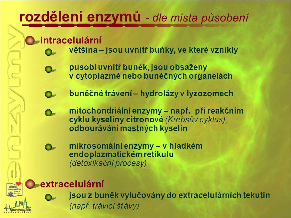 rozdělení enzymů - dle místa působení