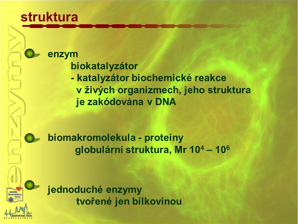 struktura enzym biokatalyzátor - katalyzátor biochemické reakce