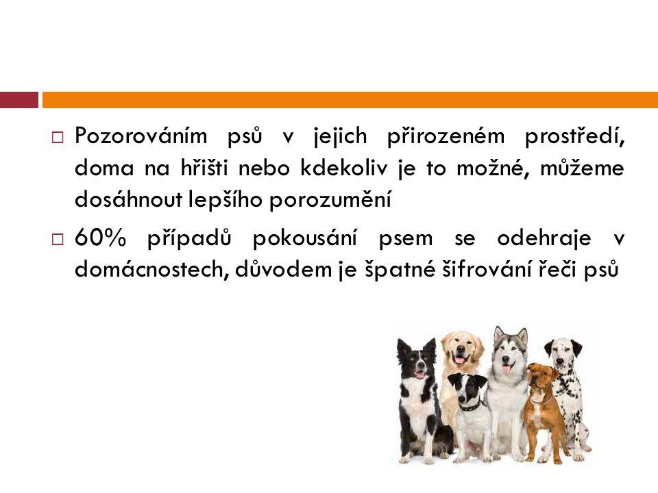 Pozorováním psů v jejich přirozeném prostředí, doma na hřišti nebo kdekoliv je to možné, můžeme dosáhnout lepšího porozumění