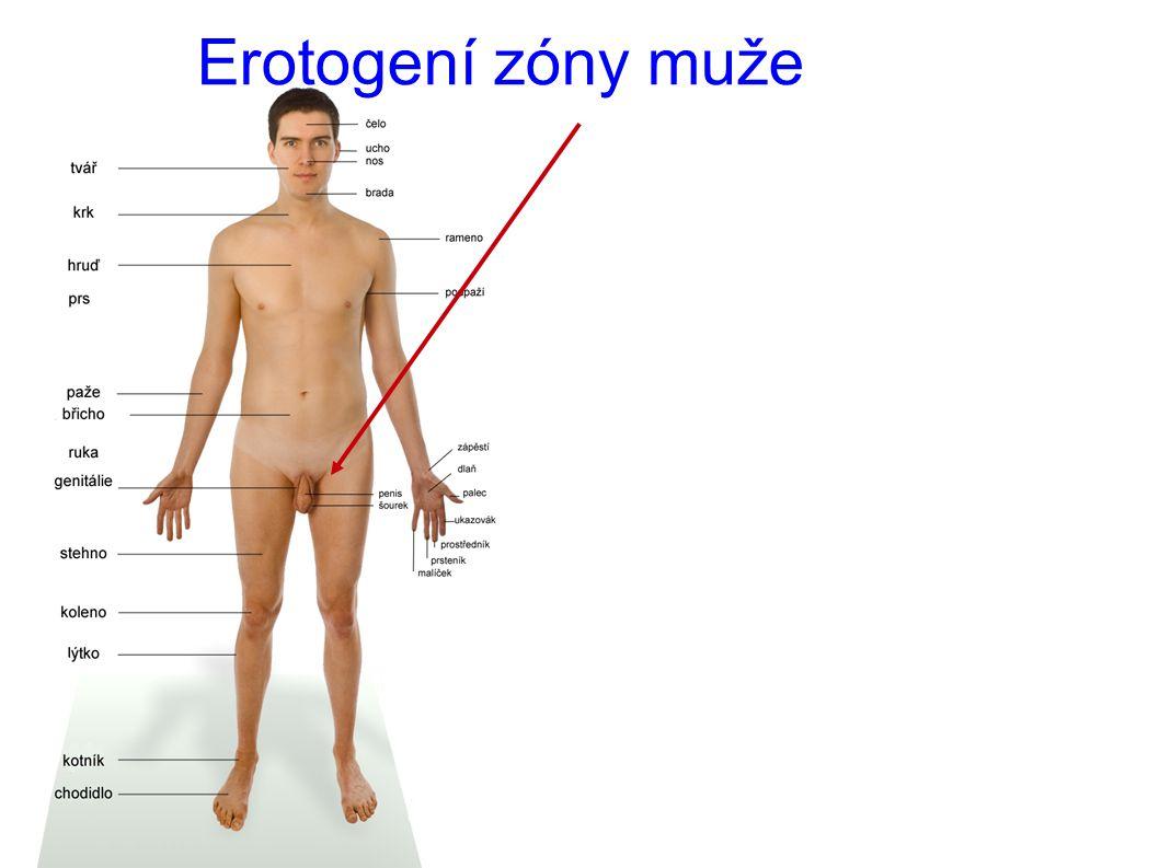 Erotogení zóny muže