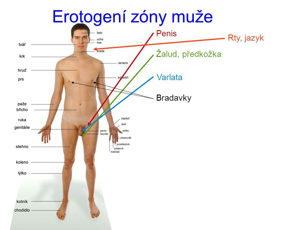 Erotogení zóny muže Penis Rty, jazyk Žalud, předkožka Varlata Bradavky