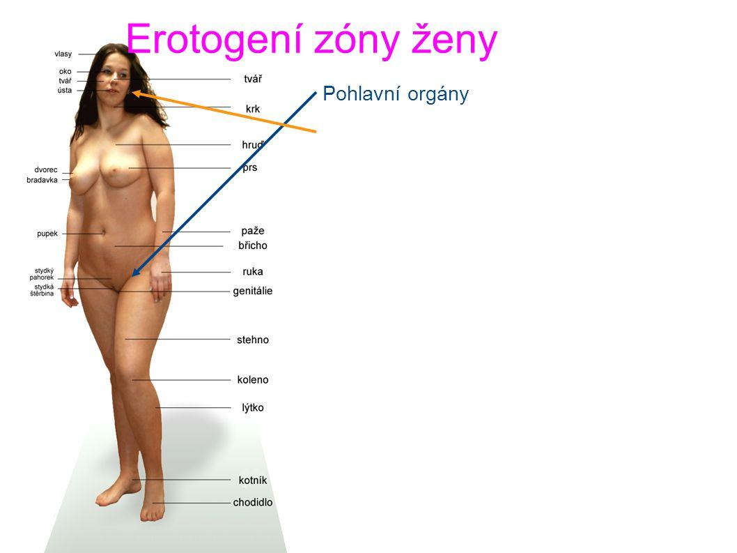 Erotogení zóny ženy Pohlavní orgány