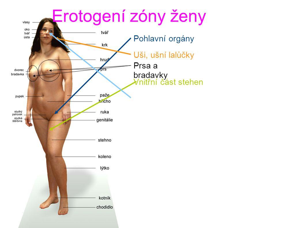 Erotogení zóny ženy Pohlavní orgány Uši, ušní lalůčky Prsa a bradavky