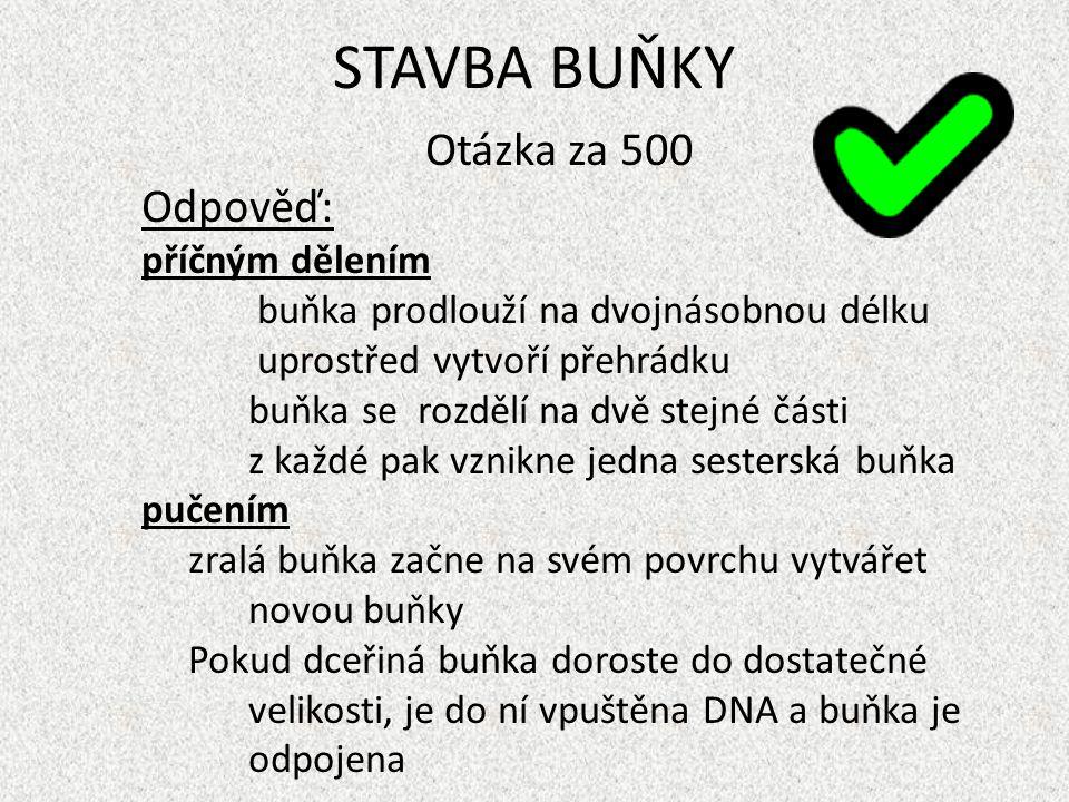 STAVBA BUŇKY Otázka za 500 Odpověď: příčným dělením