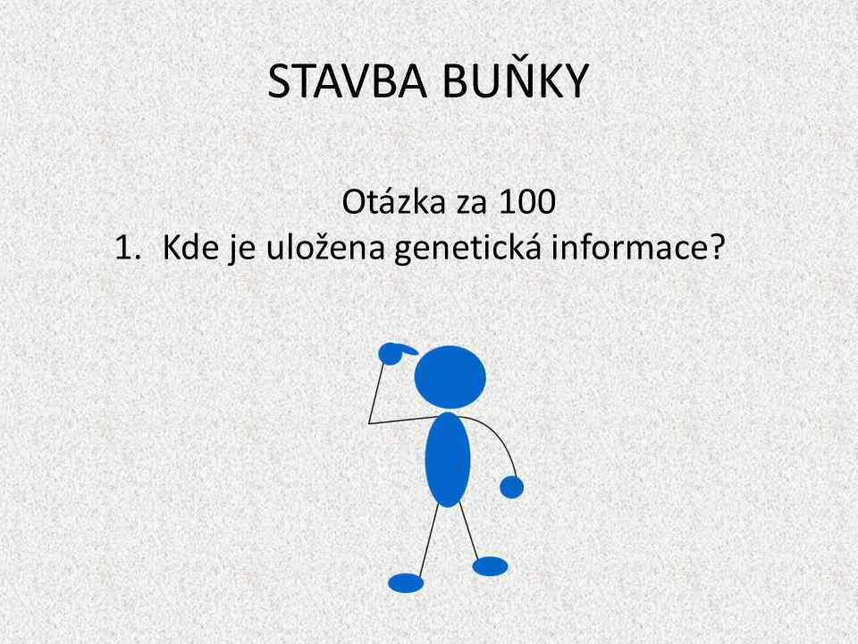 STAVBA BUŇKY Otázka za 100 Kde je uložena genetická informace