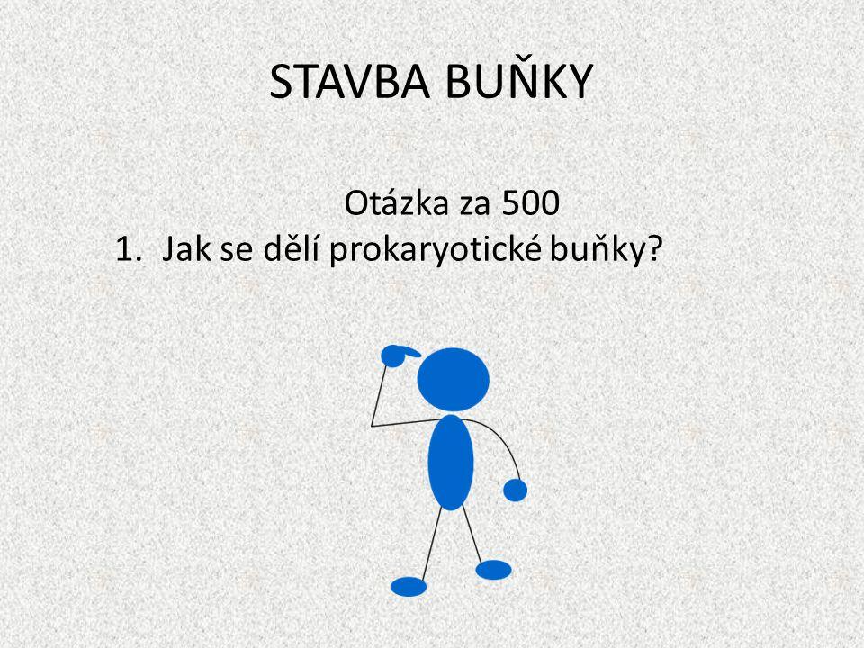 STAVBA BUŇKY Otázka za 500 Jak se dělí prokaryotické buňky