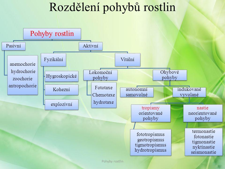 Rozdělení pohybů rostlin