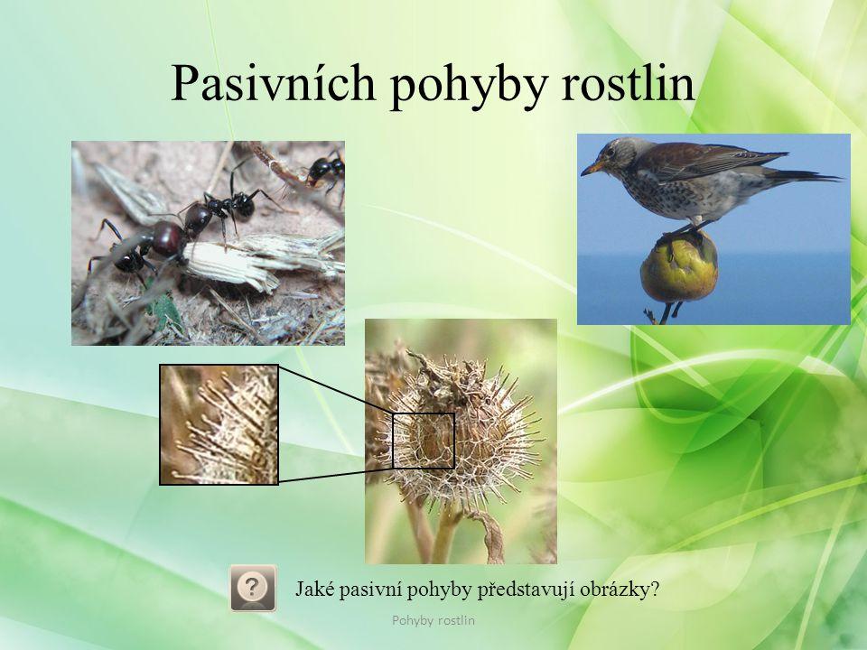 Pasivních pohyby rostlin