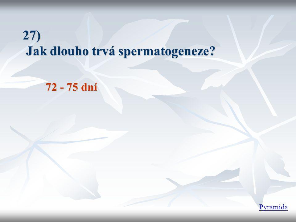 27) Jak dlouho trvá spermatogeneze