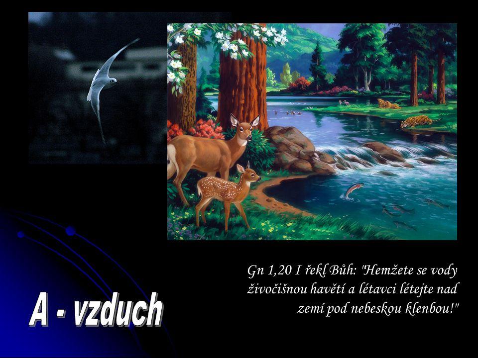 Gn 1,20 I řekl Bůh: Hemžete se vody živočišnou havětí a létavci létejte nad zemí pod nebeskou klenbou!