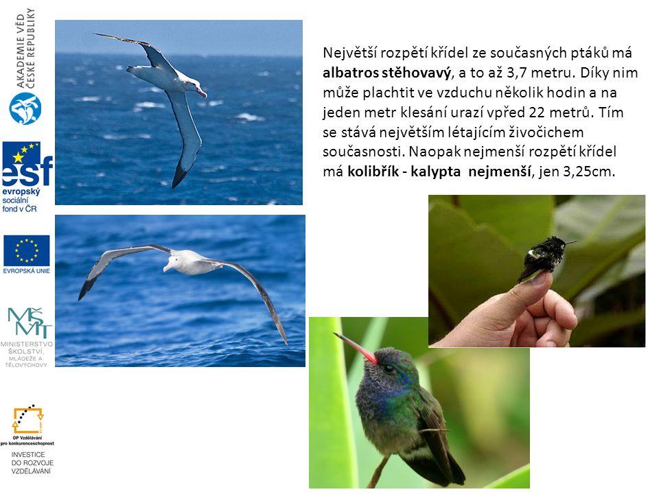 Největší rozpětí křídel ze současných ptáků má albatros stěhovavý, a to až 3,7 metru.