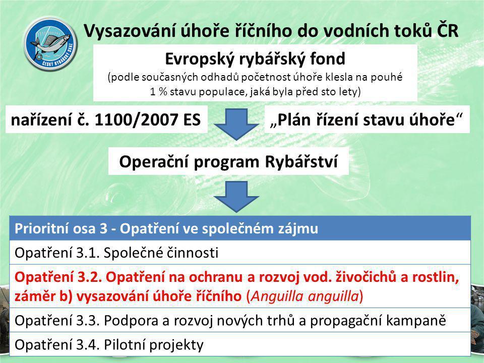 Vysazování úhoře říčního do vodních toků ČR