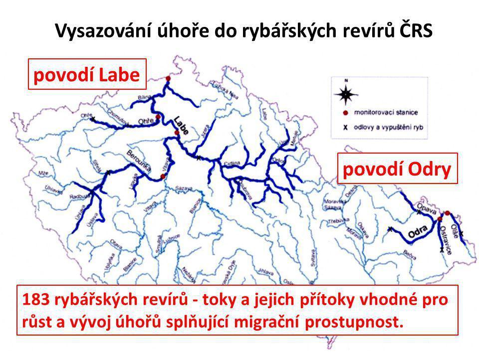 Vysazování úhoře do rybářských revírů ČRS