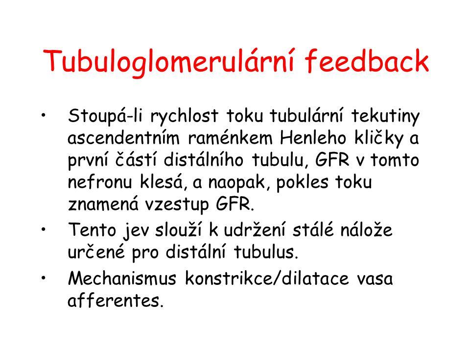 Tubuloglomerulární feedback