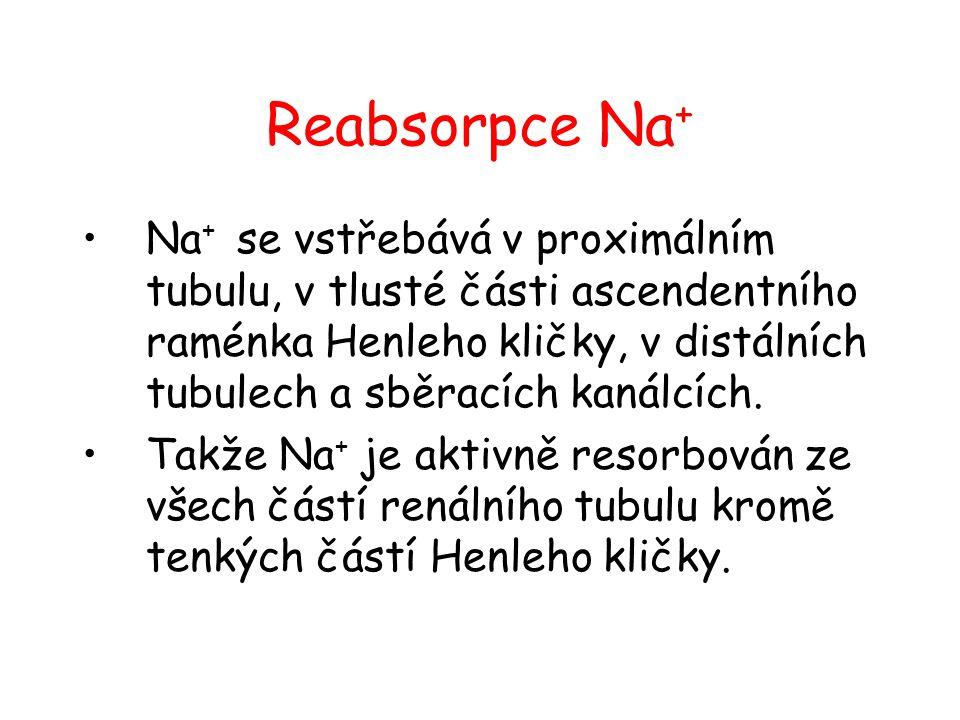 Reabsorpce Na+