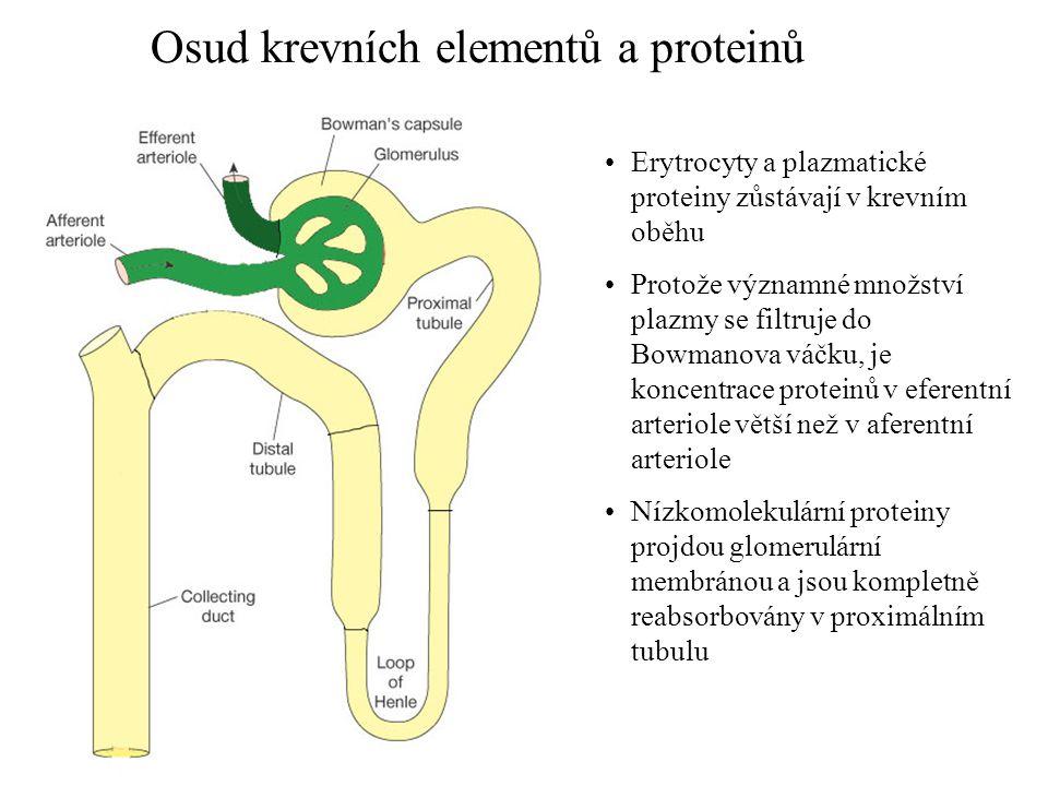 Osud krevních elementů a proteinů
