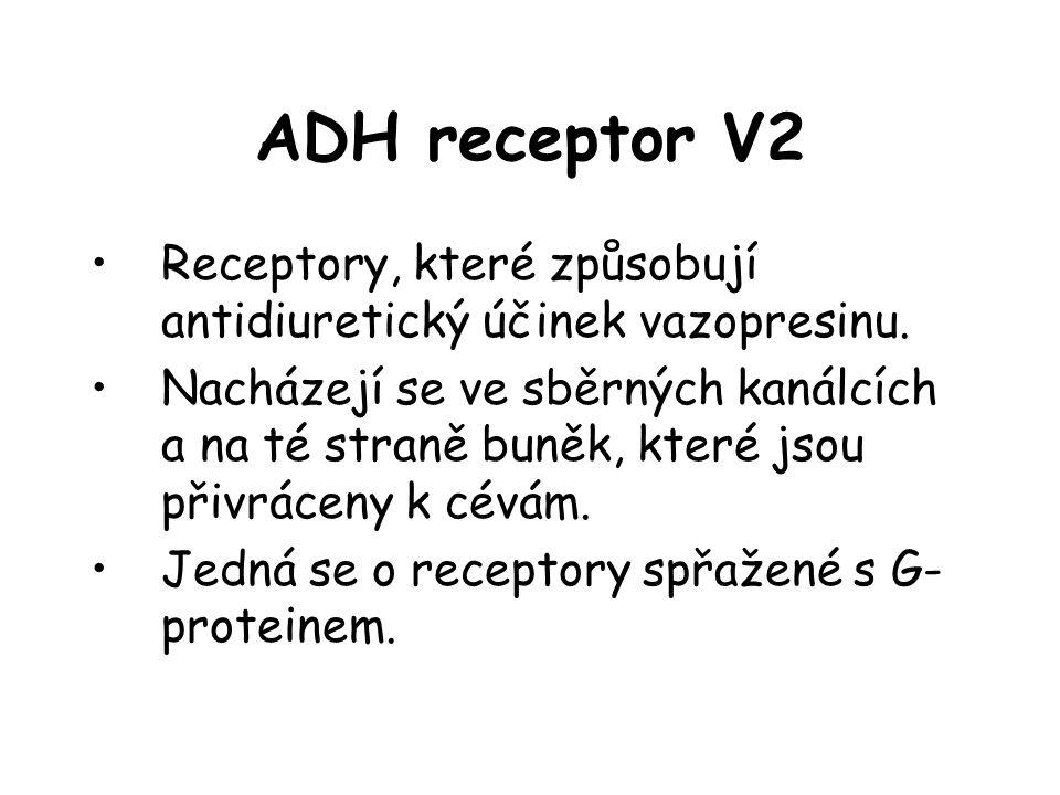ADH receptor V2 Receptory, které způsobují antidiuretický účinek vazopresinu.