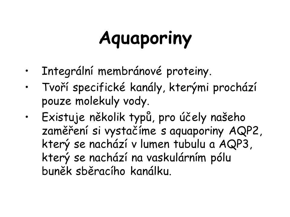 Aquaporiny Integrální membránové proteiny.