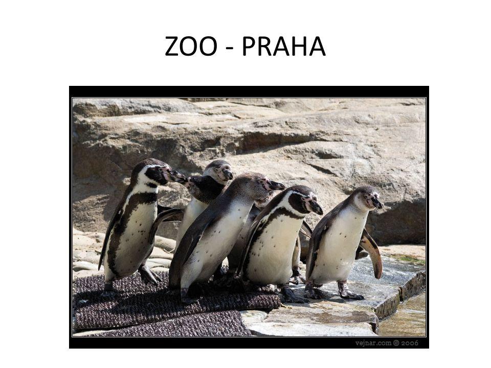 ZOO - PRAHA
