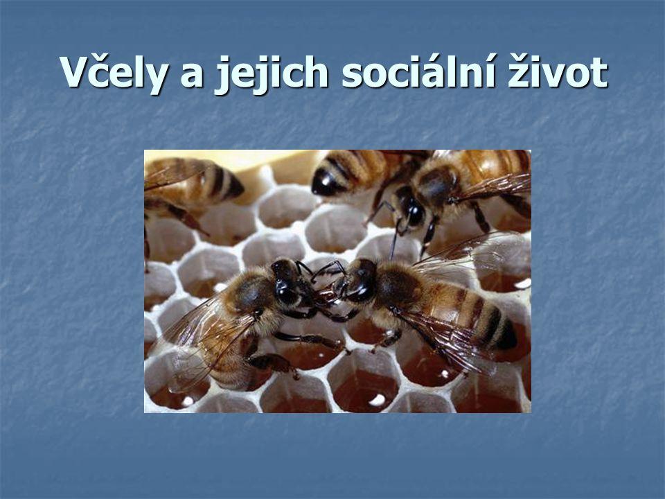 Včely a jejich sociální život
